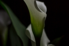 Week-16-Natures-Flute